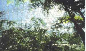 Biosphere 2 Rainforest