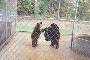 Baby Bears Play Area