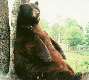 Tyson Bear