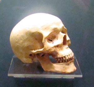 Replica of Pre-Indian skull found in 1838 excavation