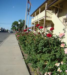 Roses line City Hall on Railroad Street