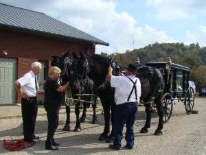 Two black Perchenon horses prepare for the procession.