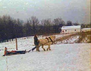 Pepper, the Pony, pulls a sleigh through the snow.