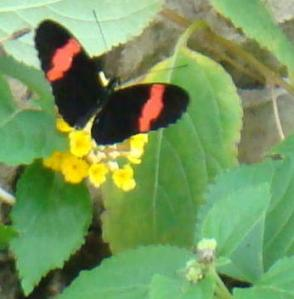 Butterfly on Bloom