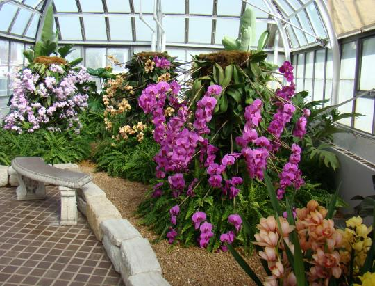 Beautiful orchids in various hues and scents