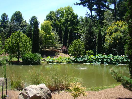 Small Lake in Conifer Garden