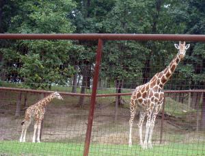 Luke and mother, Libery in the Giraffe Pen.