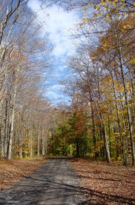 A scenic gravel road through wild, wonderful West Virginia in the fall of the year