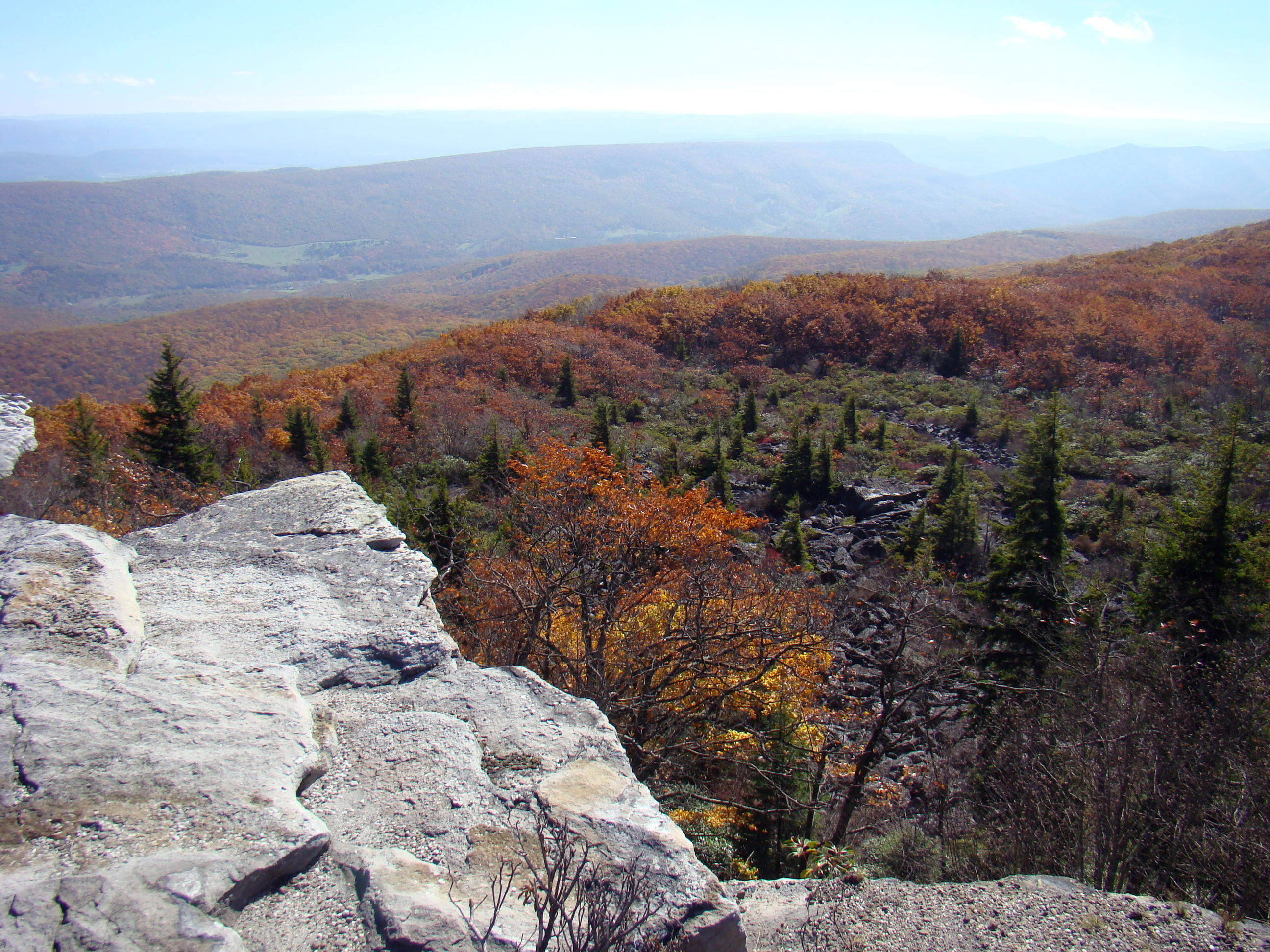 Desolate Dolly Sods Wilderness In Allegheny Mountains