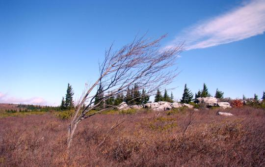 Windy Dolly Sods
