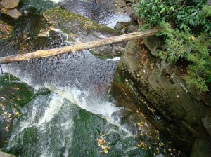 View of Elakala Falls from the top