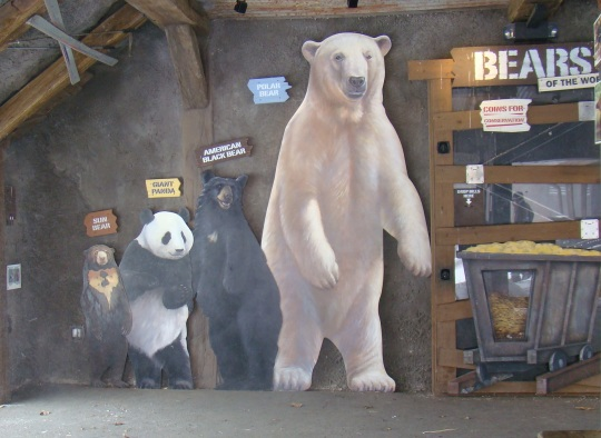 Compare the size of various bears.
