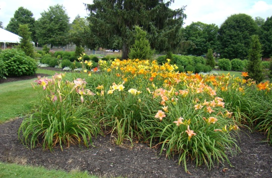 Day Lilies greet visitors to the Zoar Gardens.