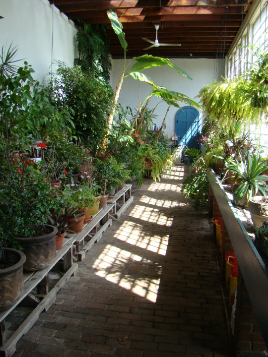 Tropical plants were stored in the greenhouse during the winter months.