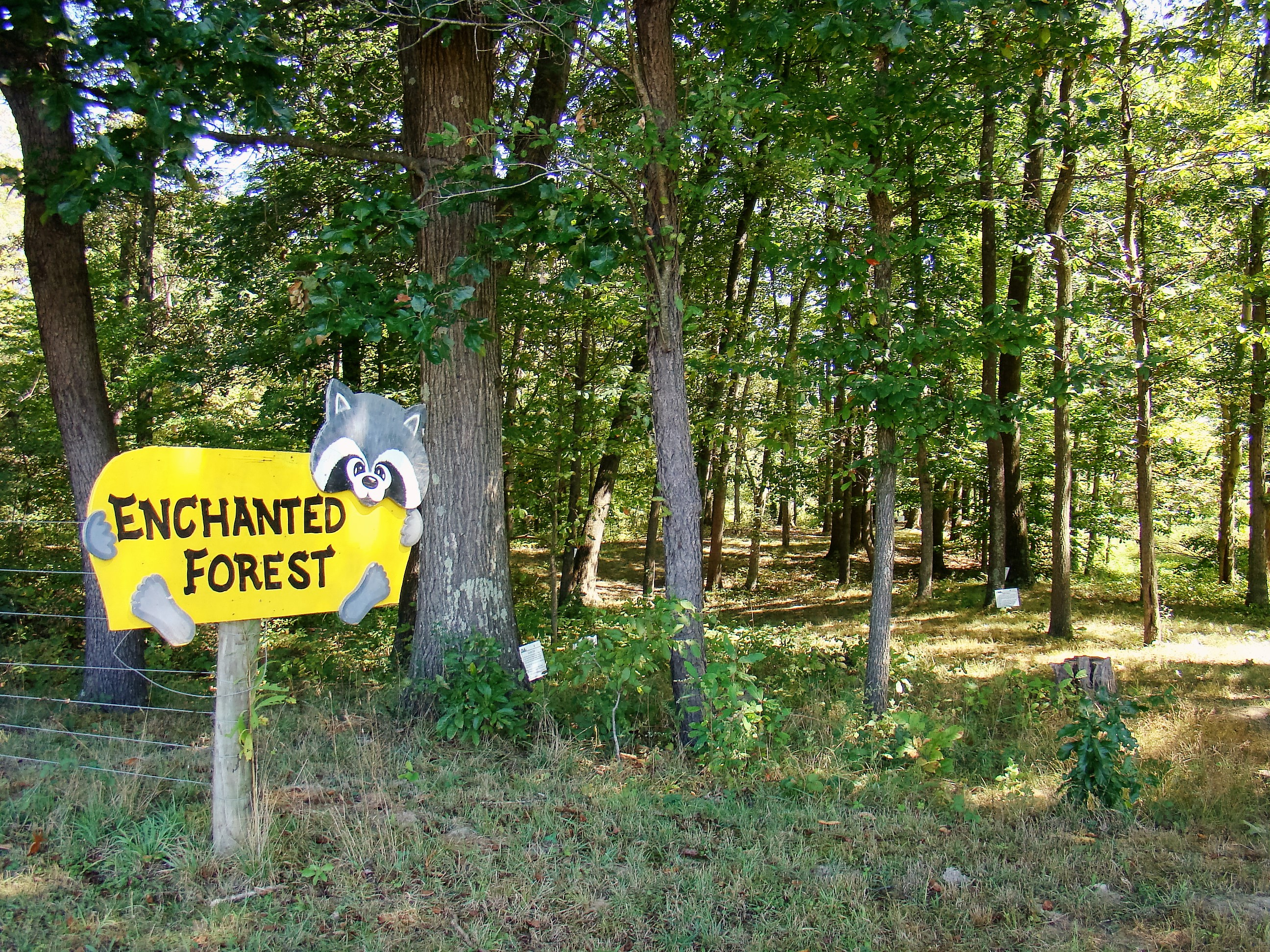 Take a walk in the Enchanted Forest and discover how early farmers lived.