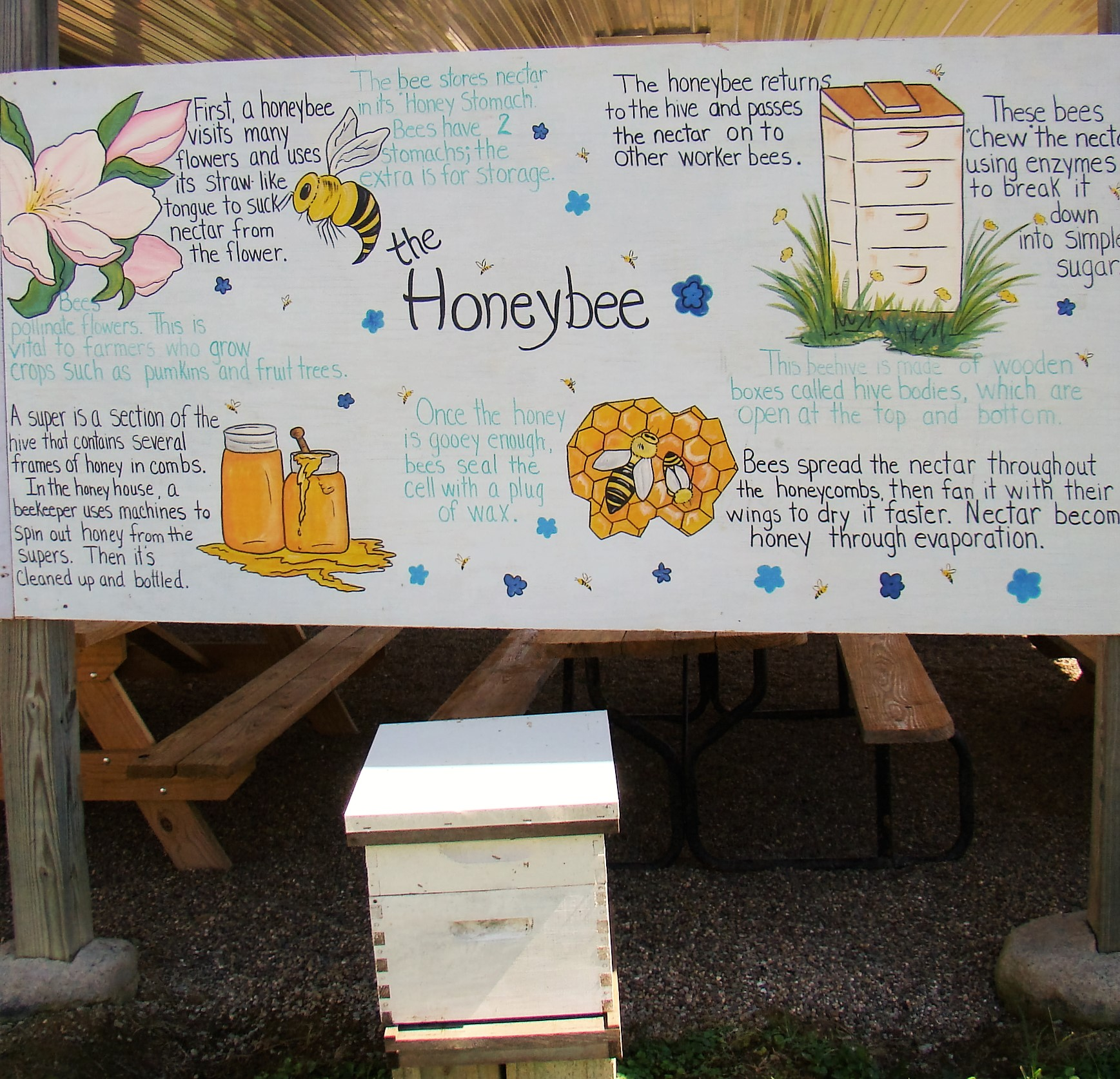 Educating students and adults about honey bees is one of Jim's enjoyments.