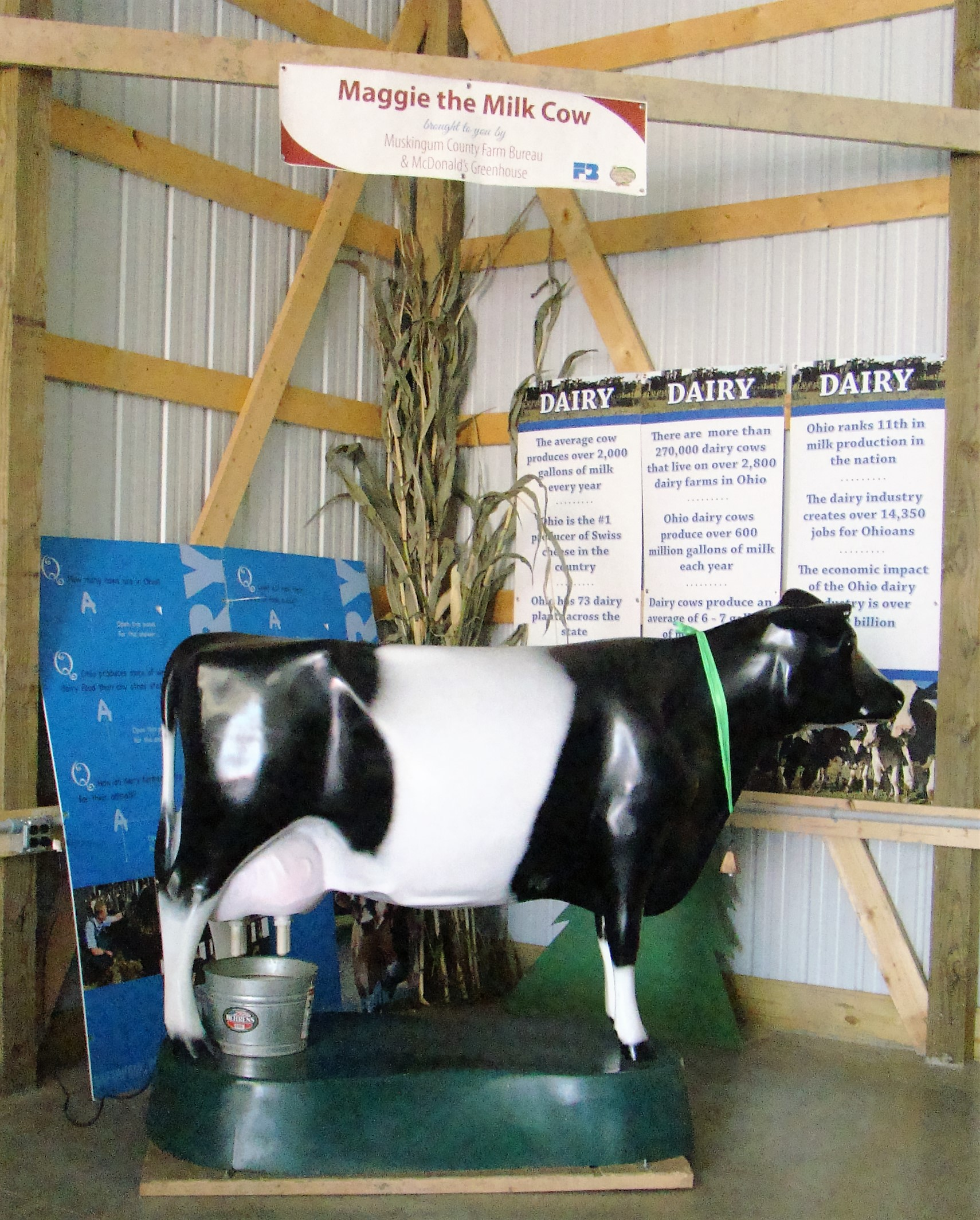 Maggie the Milk Cow even goes to the county fair for demonstrations on how to milk a cow.