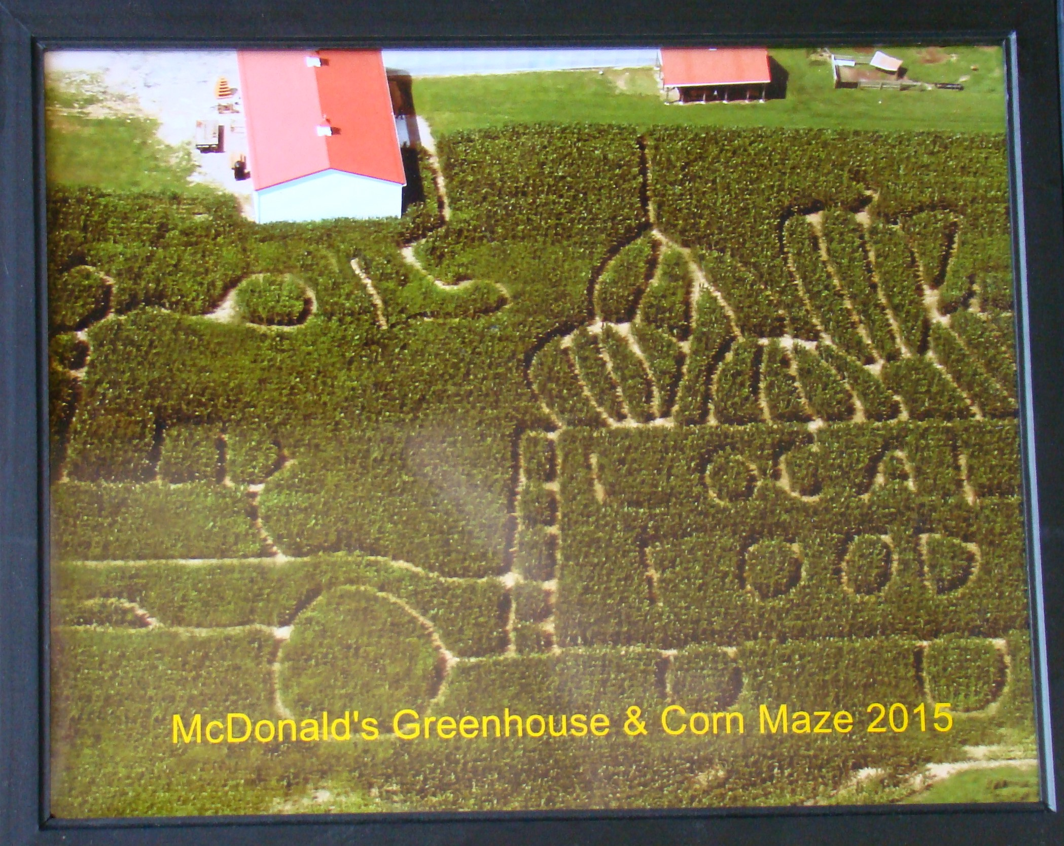 Pictures is an overview of the 2015 maze.