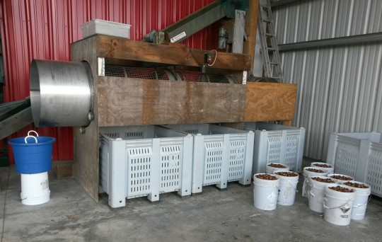 This Drum Sizer cleans and sizes the chestnuts.