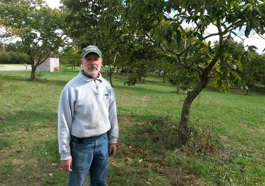 Greg Miller enjoys telling everyone about his chestnut orchard.