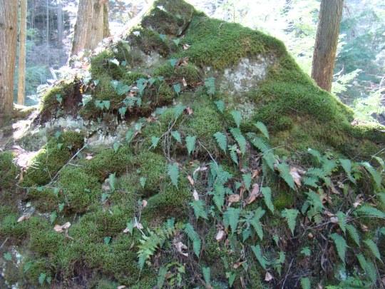 Cedar Falls Ferns