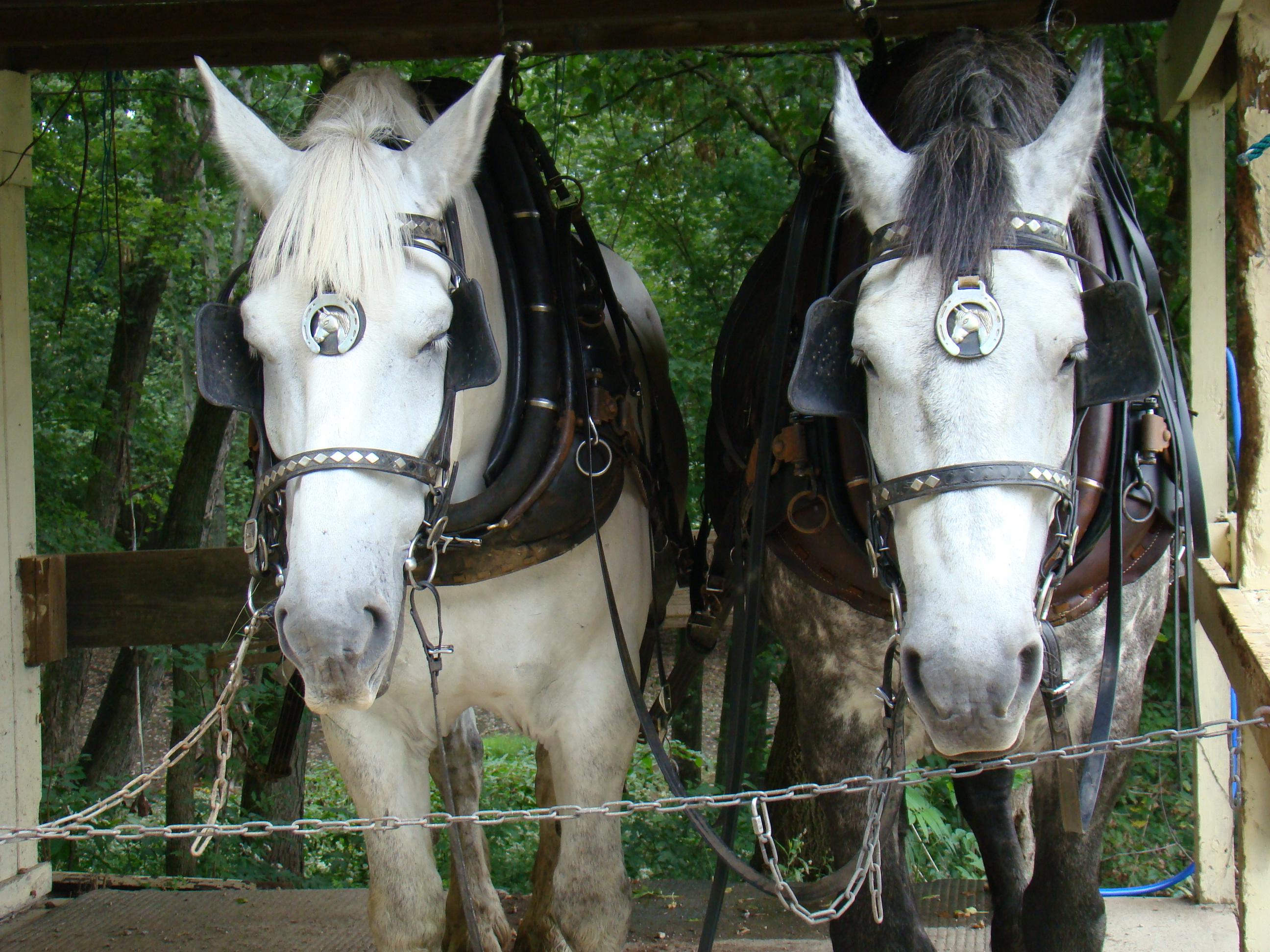 Monticello horses