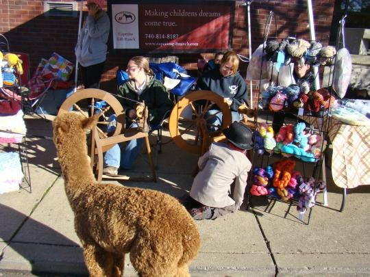alpaca-booth