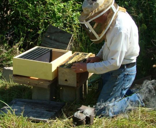 Bee New Hive