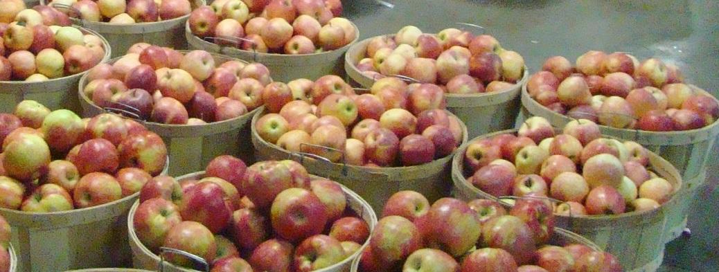 Hillcrest apples