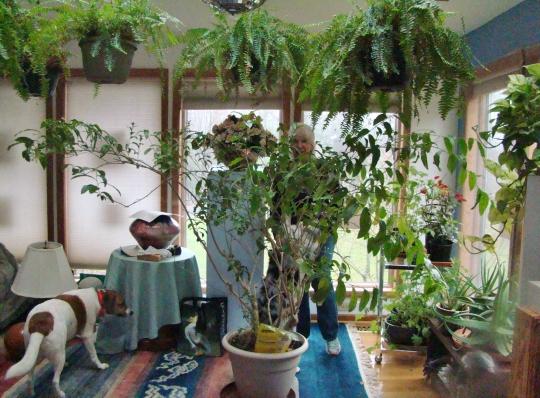 Pat Bathroom Greenhouse