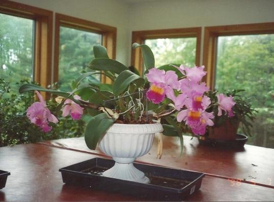 Pat favorite orchid