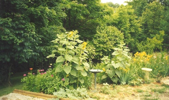 Pat flower garden 001