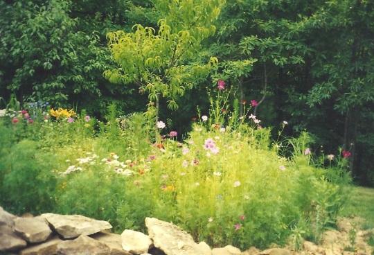 Pat's flowers 001