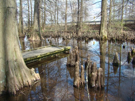 Dawes Cypress Swamp