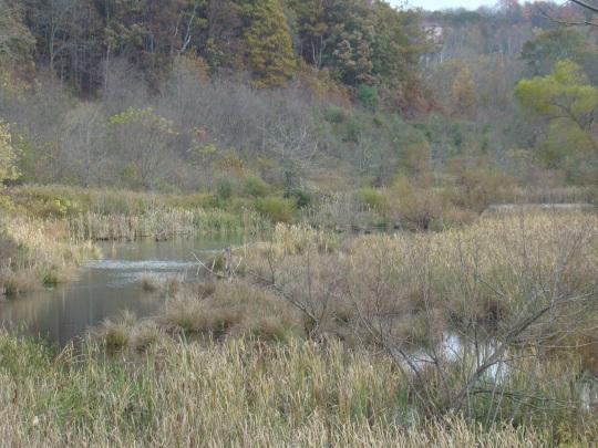 Howard Beaver Dam