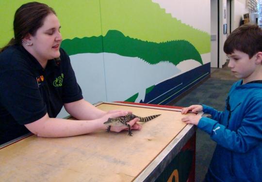 COSI Baby Alligator