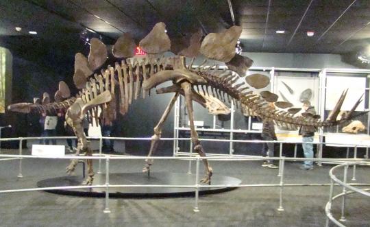 COSI Stegasauras