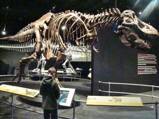 COSI Tyranosaurus Rex