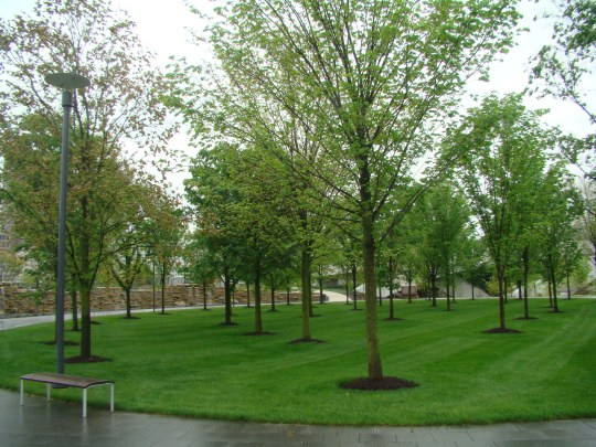 Veterans Memorial Grove