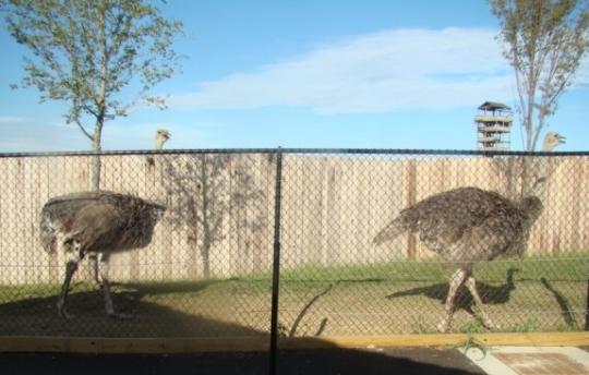 Ark Emus