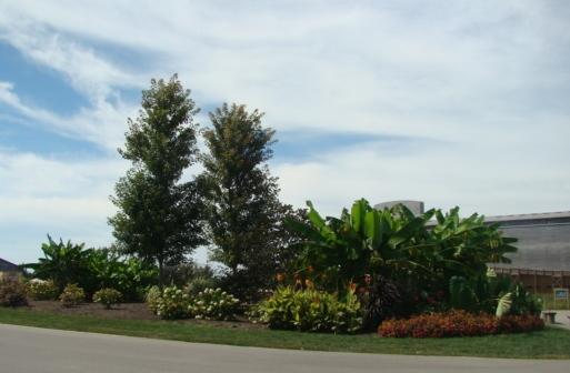 Ark Entrance Garden