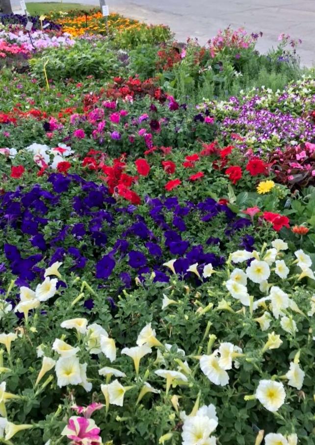 McDaniels May flowers