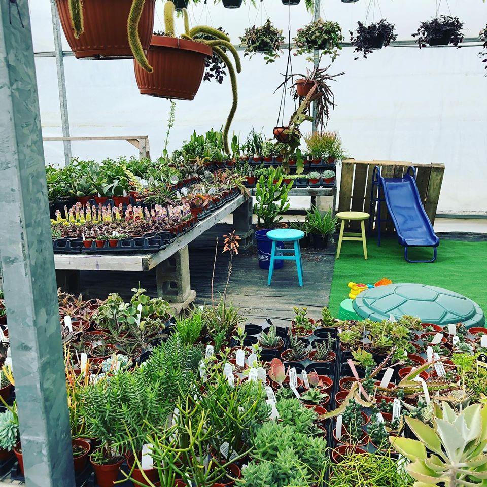 McDaniel's Succulent Area