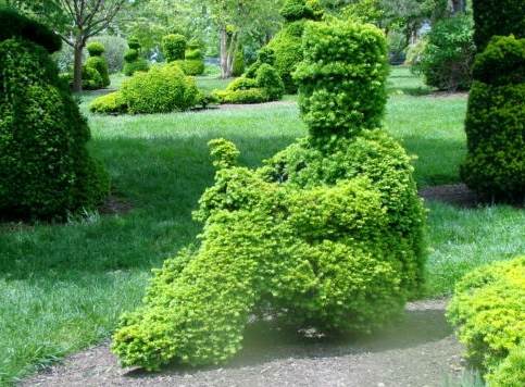 Topiary - Man with tophat